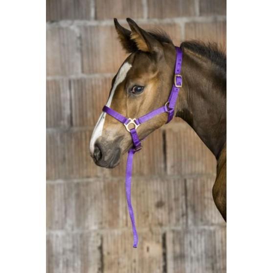 Licol nylon poulain ou foal