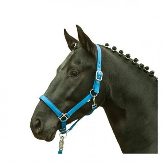 Licol cheval fluo HKM jaune orange vert bleu shetland au trait Bleu roi