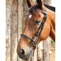 Bridon bitless cuir DMH Equitation Majestic