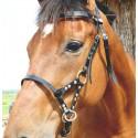 Side Pull biothane DMH-Equitation
