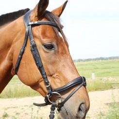 Bridon têtière large Jerez DMH Equitation Majestic