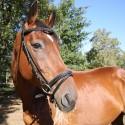 Bridon surpiqué DMH Equitation