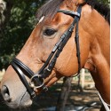 Bridon muserolle combiné  DMH Equitation