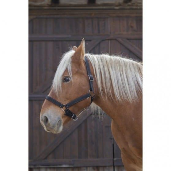 Licol Norton Pro pour cheval de trait noir
