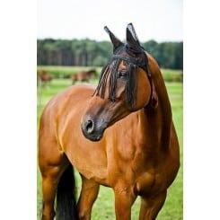 Bonnet chasse-mouches pour chevaux