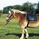 Selle Excelsior pour cheval de trait