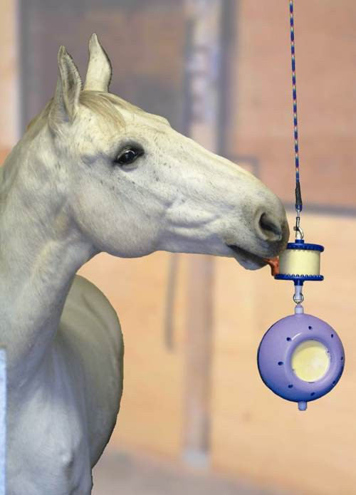 jeux cheval box