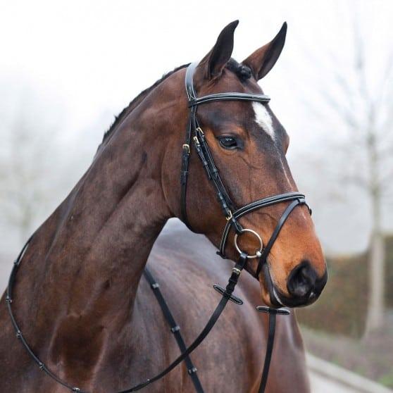 Filet Constance Horze poney au trait Noir
