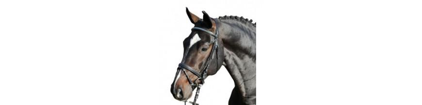 Bridons cheval