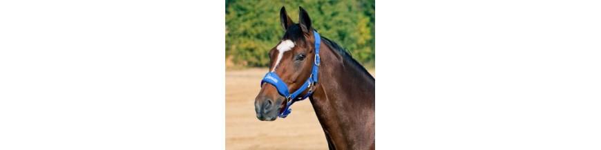 image cheval licol